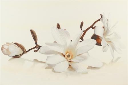 Декор Opoczno Flora магнолия 30х45
